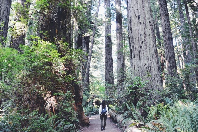 © Janine Juna Grafe - Redwoods