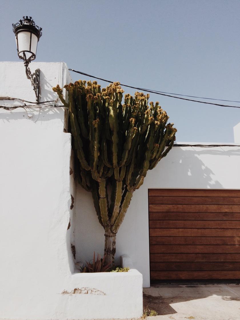 Haría Lanzarote © Janine Juna Grafe
